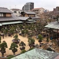 盆栽美術館「春花園」の記事に添付されている画像