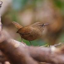 水元公園の安定の小鳥たち。の記事に添付されている画像