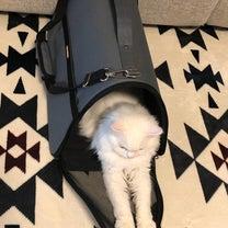 ペット病院への道のりの記事に添付されている画像