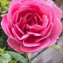 ❤️SPRING HAS COME&Flower season❤️の記事に添付されている画像