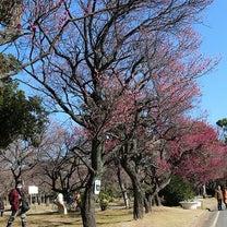 公園の梅の記事に添付されている画像