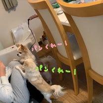 りん、1ヶ月ぶりの受診の記事に添付されている画像