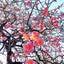 いつかほどかれる花のように♡泡と春コーデ