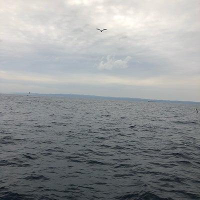 午後真鯛船募集中!!の記事に添付されている画像