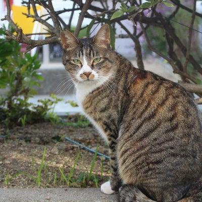地域の人々に見守られてる・・・地域猫たちですの記事に添付されている画像
