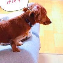 忠犬ソラ公の記事に添付されている画像