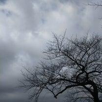 火曜日は曇っている(河津さくら)の記事に添付されている画像