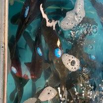 上海のスーパーの生け簀の魚に商品タグの記事に添付されている画像