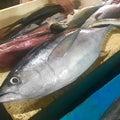 #魚市場の画像