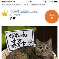 看板猫ランキング 1位になりましたの記事に添付されている画像
