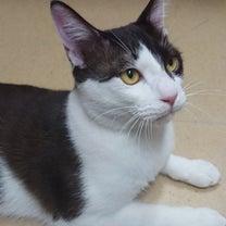 今日は雨!カフェでゆっくりのんびりしようよ!保護猫達の里親様も大募集中ですの記事に添付されている画像