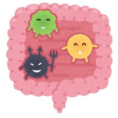 「やせ菌」の増やし方! ◇岡崎 耳つぼダイエット 骨盤矯正 資格 整体院めざめ◇の記事に添付されている画像