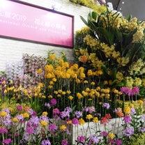 世界蘭展2019(花と緑の祭典)①の記事に添付されている画像