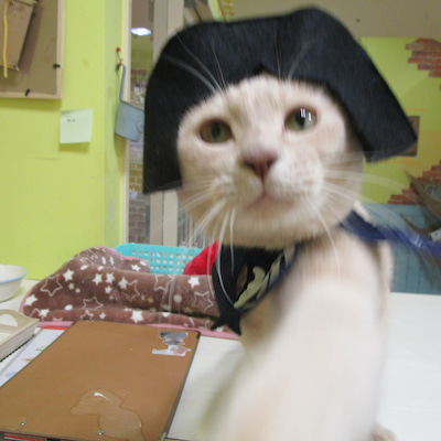 いよいよ猫の日まであと一日・・・猫パワーを高めるのニャ!の記事に添付されている画像