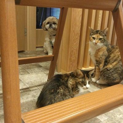 猫部屋で疲れを癒しての記事に添付されている画像