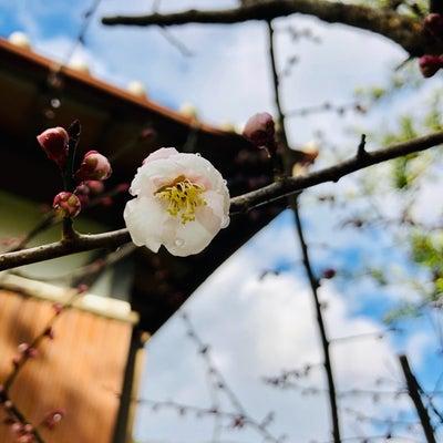 雨水◎ モリンガ☆ネシアンのはっぱ新春お年玉プチプレゼントを配布してます♡の記事に添付されている画像