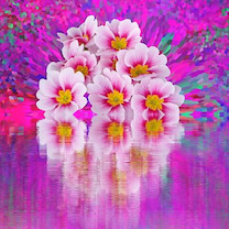 [季節のお花]サクラソウについての記事に添付されている画像
