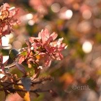 春の景色。の記事に添付されている画像