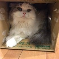 【我が家】ネコのビックリ箱現る【大騒ぎ】の記事に添付されている画像