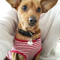 のんのんの番犬気質?の記事に添付されている画像