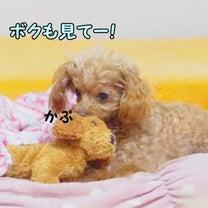 リズちゃん 2代目子分と♪ 【動画アリ】 ( ブログ更新しました)の記事に添付されている画像