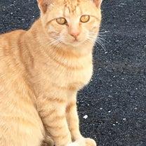 久々の猫の話の記事に添付されている画像