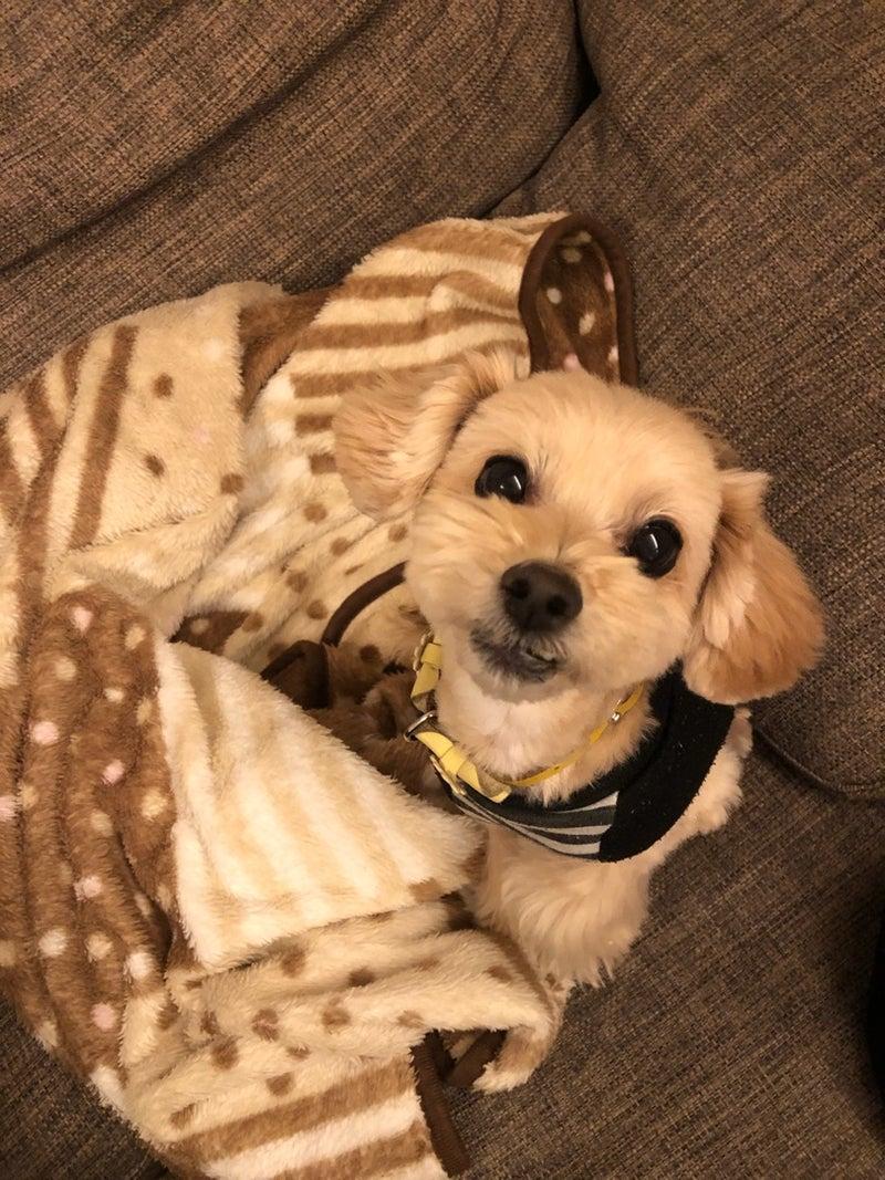 乳頭腫 ミックス犬マルプー ごろまるの成長日記