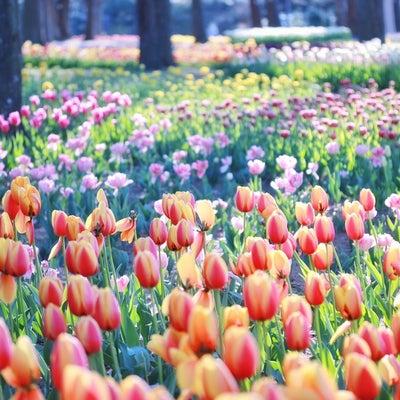 花粉シーズンに心強い○○♡の記事に添付されている画像