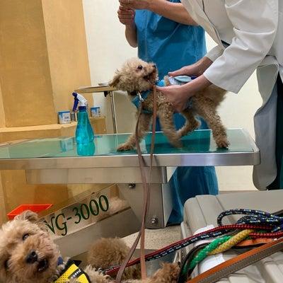 KOKUAの保護犬:医療ケアラッシュの記事に添付されている画像