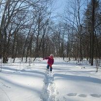 森でお散歩の記事に添付されている画像