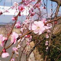 春の兆しの記事に添付されている画像