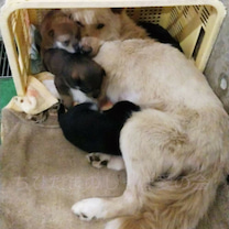 ★2月25日(月)期限★長門の母子ワンちゃんの命を繋いで下さい!の記事に添付されている画像