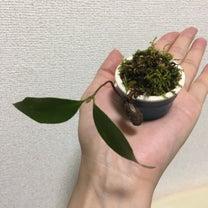 早春 雑木林のおくりもの③の記事に添付されている画像