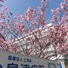 桜!!の画像