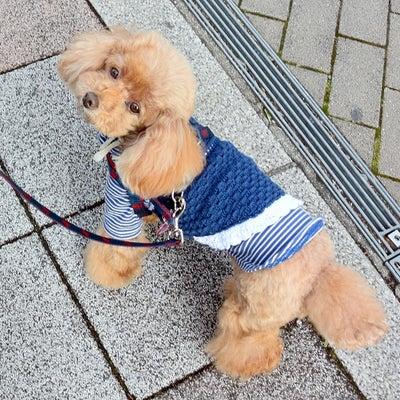 犬嫌いの人に言われたのは・・・の記事に添付されている画像