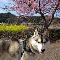 伊豆の春便りの記事に添付されている画像