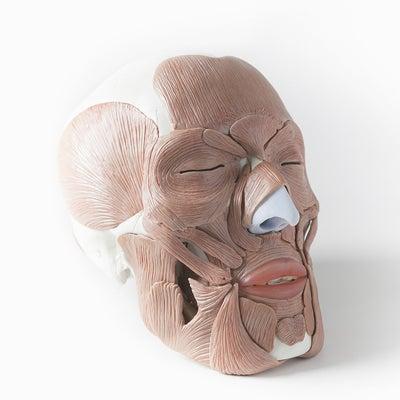 three-S主催「顔面の立体構造と結果を出す 技術テクニックセミナー」開催!の記事に添付されている画像
