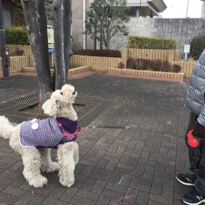 小江戸川越新名所!梅も綺麗ね桜も咲いた?かりんのお散歩。の記事に添付されている画像