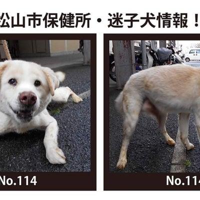 松山市保健所・迷子犬情報!*No.114雑種犬 松山市河中町の記事に添付されている画像