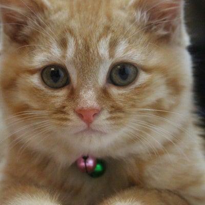 子猫の保育園・・もうすぐ卒園かな?・・ネコ市ネコ座に向けて素敵な商品が届いていまの記事に添付されている画像