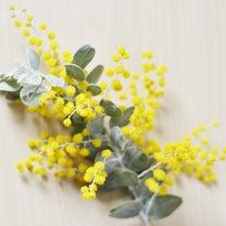 春のお花 ミモザの記事に添付されている画像