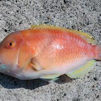 宇和海の魚のお味~の記事に添付されている画像