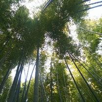 ついにオレさま念願の竹林へ!の記事に添付されている画像