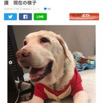 虐待されていた犬のレイちゃんの記事に添付されている画像