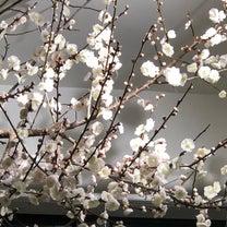 2月20日(水)の店内の様子♪の記事に添付されている画像