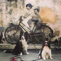 犬連れペナン旅行〜Day2(海と川へ)の記事に添付されている画像