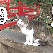 【 新たなブーム??? 】(旧作セレクト)〜田代島ねこ便り〜2019年!の記事に添付されている画像