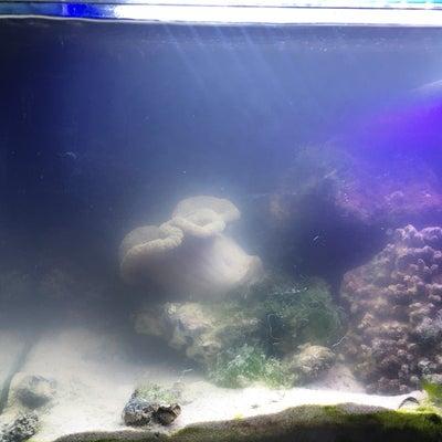 30cmキューブ水槽37日目の記事に添付されている画像