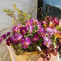 軒下の寄せ植えたち*ベランダのラベンダー*ガーデニングの楽しみの記事に添付されている画像