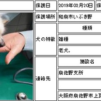 拡散希望:27日期限の迷子MIX犬:大阪府泉佐野市の記事に添付されている画像